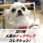 【2017年】人気のドッグウェア5選♪あなたの愛犬はどれが似合うかな?