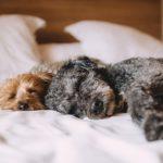 犬用ベッド・クッションが大人気!おしゃれで可愛いと評判のおすすめ3選