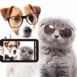 ペット用のスマホ対応見守りカメラでおすすめはこれ!人気ランキングTOP5