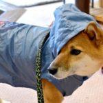 犬用のレインコートでおしゃれでおすすめはこれ!人気ランキング10選♪